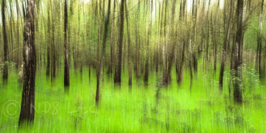 Spring Forest, Yorkshire www.richardjwalls.com