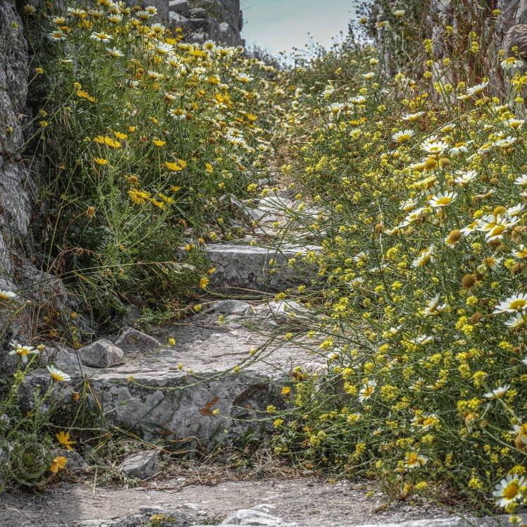 Ancient Paths, Thera, Santorini | Sigma Merrill DP3 | www.richardjwalls.com