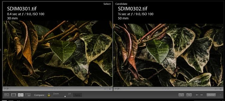 Clocks & Green - Brown Leaf