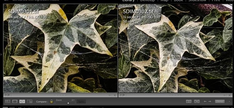 Clocks & Green - Leaf