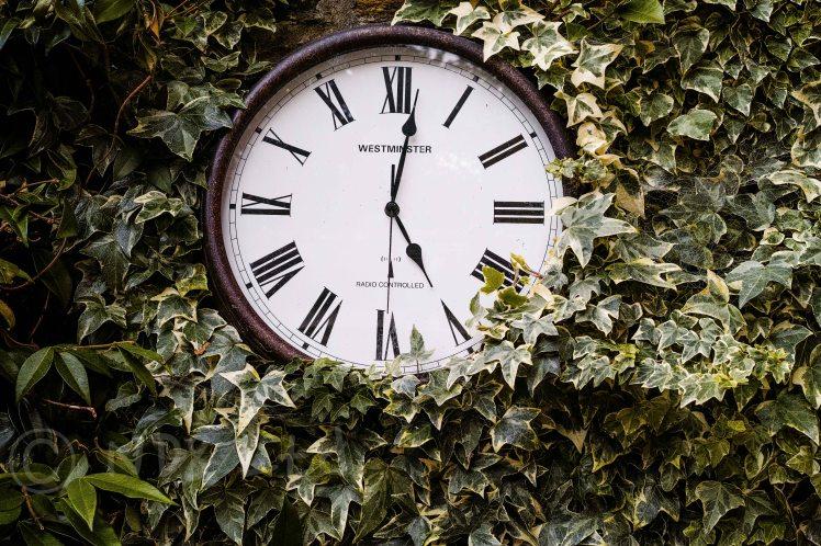 Clock & Green | Quattro DP2