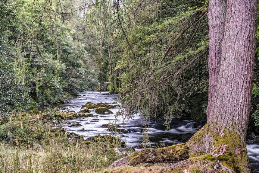 Elterwater Wilderness | Sigma Merrill DP3 | www.richardjwalls.com