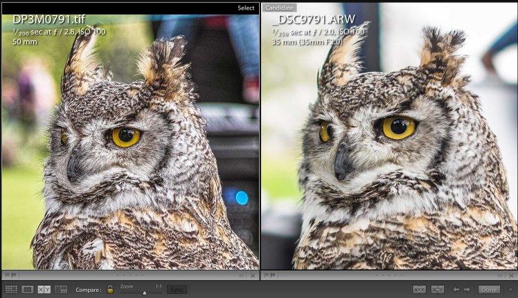 Owl | Detail | www.richardjwalls.com