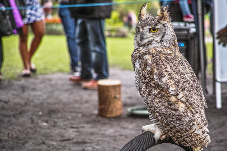 Owl | Sigma DP3 Merrill | www.richardjwalls.com