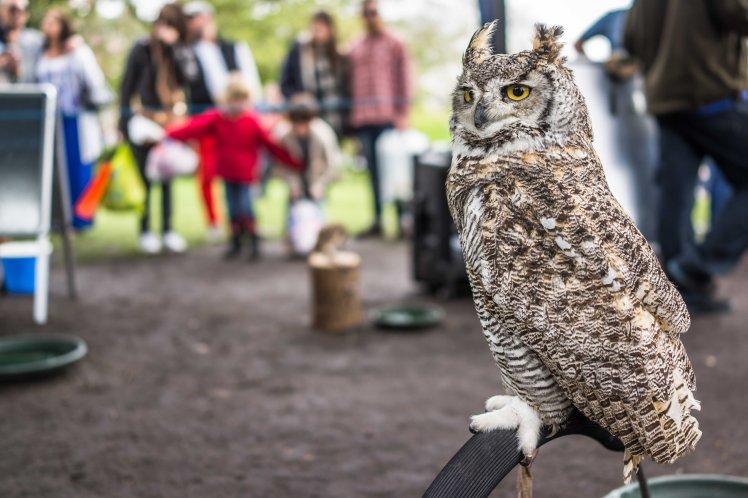Owl | Sony RX1 | www.richardjwalls.com