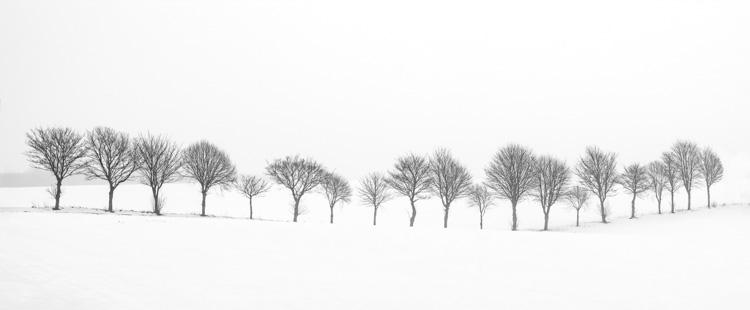 Nineteen Trees
